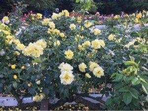 Yoyogi Flowers2