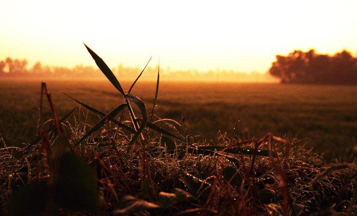 バックウォーターの朝虫目線700