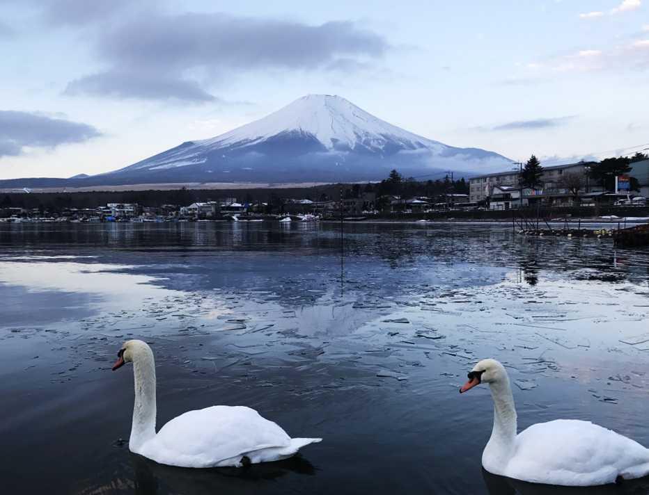 富士山と白鳥の朝焼け5