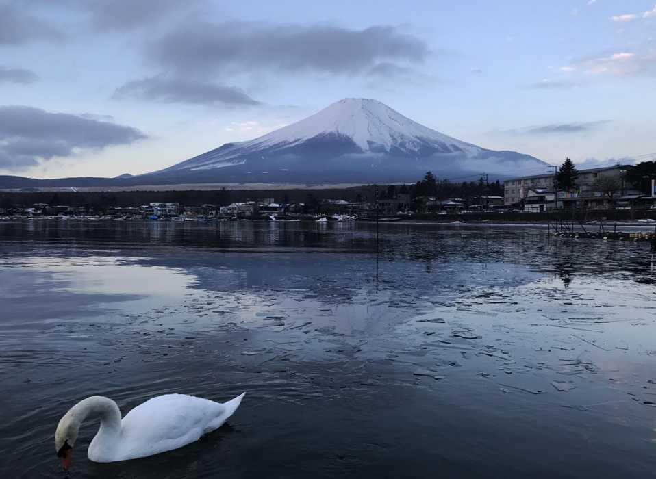 富士山と白鳥の朝焼け7