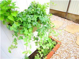 guesthouse sharehouse HERB GARDEN MACHIYA building14