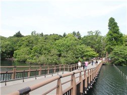 Great atmosphere! Inogashira Park